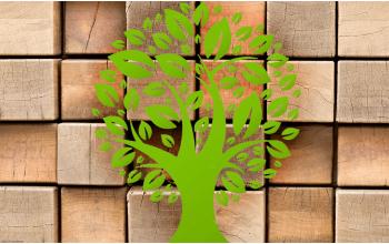 Деревянные игрушки: экологичность и другие достоинства